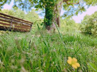 公園をぶらり散歩の写真・画像素材[2260252]