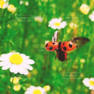 水玉の羽根の写真・画像素材[2477431]