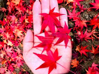 紅葉🍁の写真・画像素材[2511606]