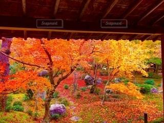 秋の京都一人旅の写真・画像素材[2792102]
