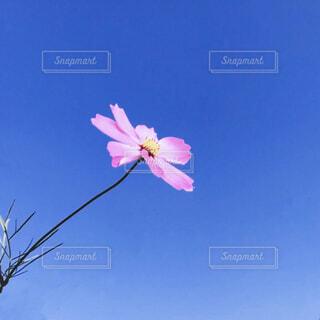 青空に向かっての写真・画像素材[4313317]