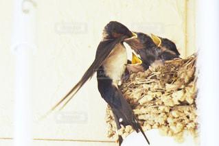 枝の上に座って鳥 - No.726048