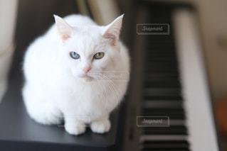白い面の上に座って猫 - No.1005826