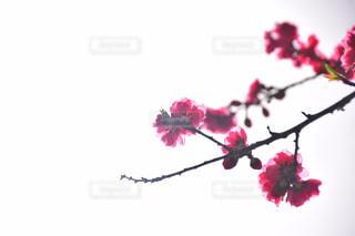 花,春,合戦場,二本松
