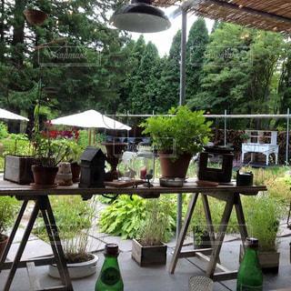 ランチ,庭,ミオンカフェ