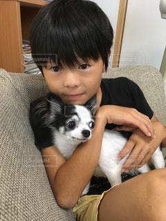 家族,犬,チワワ,屋内,かわいい,いぬ,ソファー,人,座る,可愛い,dog,男の子,息子,お家,わんちゃん,boy
