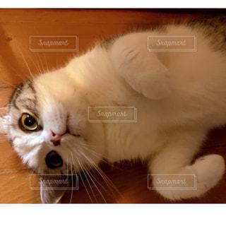 近くに猫のアップの写真・画像素材[729632]
