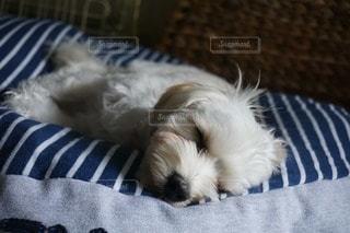 犬の写真・画像素材[11640]