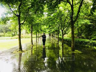 自然,風景,空,夏,緑,青空,後ろ姿,人物
