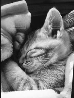 横になって、カメラを見ている猫 - No.871003