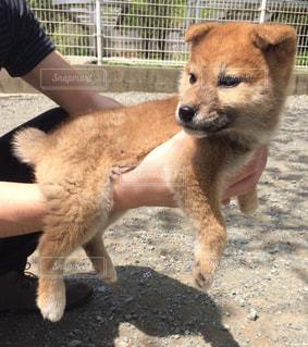 犬を抱きかかえたの写真・画像素材[871006]