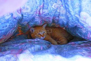 ベッドの上で横になっている猫 - No.871026