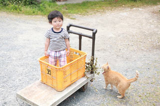 犬のベンチに座っている少女の写真・画像素材[973534]