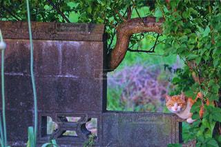 庭に座っている猫の写真・画像素材[973596]