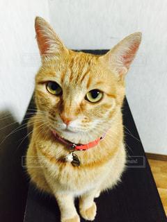 テーブルの上に座って猫 - No.973621