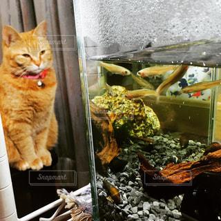カウンターに座っている猫の写真・画像素材[973629]