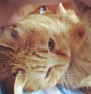 近くに猫のアップの写真・画像素材[973638]