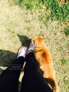 草の上に座って猫対象フィールドの写真・画像素材[973710]