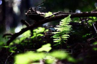 森の中の工場の写真・画像素材[1157654]