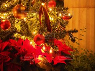 冬,屋外,イルミネーション,クリスマス,クリスマスツリー,オーナメント