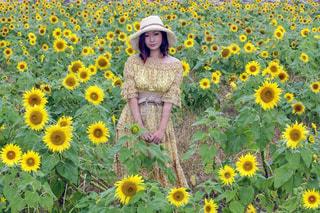 ひまわり畑の中での写真・画像素材[903108]