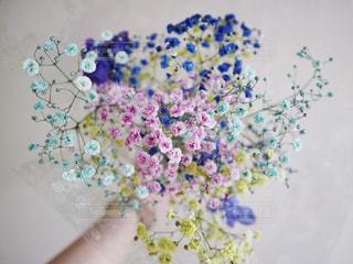 近くの花のアップの写真・画像素材[868113]
