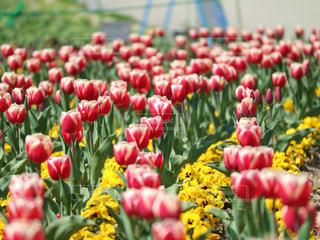 色とりどりの花のグループの写真・画像素材[1129018]