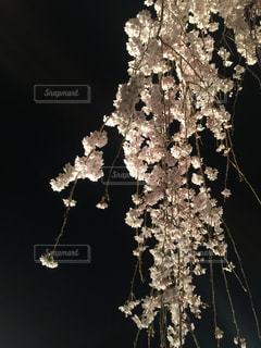 木の花の花瓶の写真・画像素材[1135832]