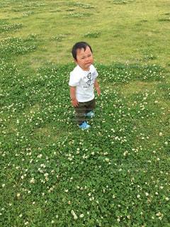 シロツメグサと泣き顔の写真・画像素材[730025]