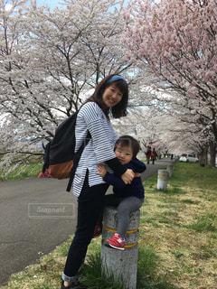 家族でお花見の写真・画像素材[736835]