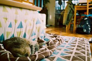 ベッドの上で横になっている猫の写真・画像素材[730297]
