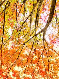 城址公園の紅葉を見上げて - No.874754