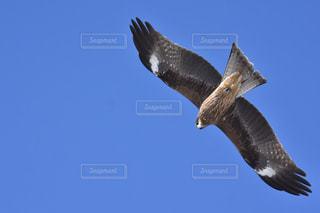 空を飛んでいる鳥の写真・画像素材[1113223]