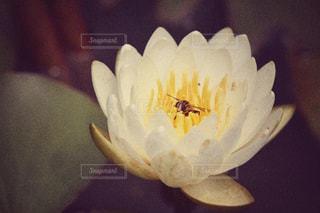 近くの花のアップの写真・画像素材[1234836]