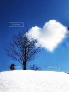 ふと空を見上げての写真・画像素材[1819940]