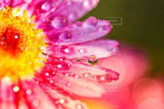 ピンク色の煌めきの写真・画像素材[2153417]