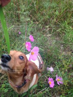 草の中で空を見つめる犬の写真・画像素材[736524]
