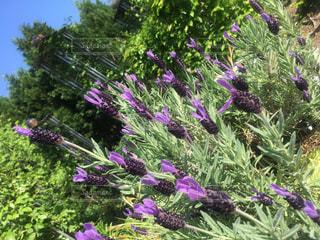 花,綺麗,青空,満開,可愛い花