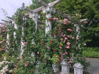 近くのフラワー ガーデンの写真・画像素材[1214019]