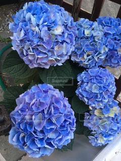花,アジサイ,梅雨を吹き飛ばそう