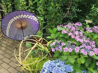 花,観光地,梅雨,アジサイ,梅雨を吹き飛ばそう