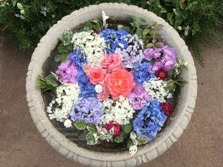 花,綺麗,観光地,可愛い,梅雨,アジサイ,梅雨を吹き飛ばそう