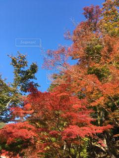 秋,紅葉,森林,山,樹木