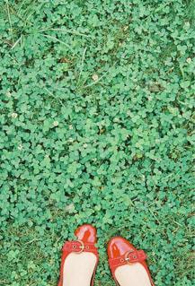 red&greenの写真・画像素材[804837]