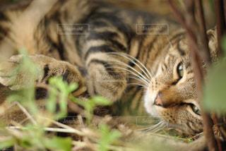草むらの子猫の写真・画像素材[1254856]