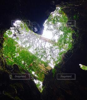 森の中の大きなハートの写真・画像素材[770574]