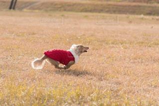 走るの大好き!の写真・画像素材[978256]