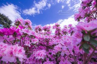近くに紫の花のアップの写真・画像素材[1138929]