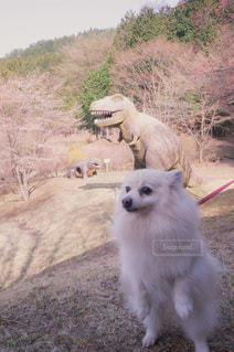 未舗装の道路を歩いて、茶色と白犬の写真・画像素材[1190018]