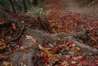 近くの木のアップの写真・画像素材[871838]